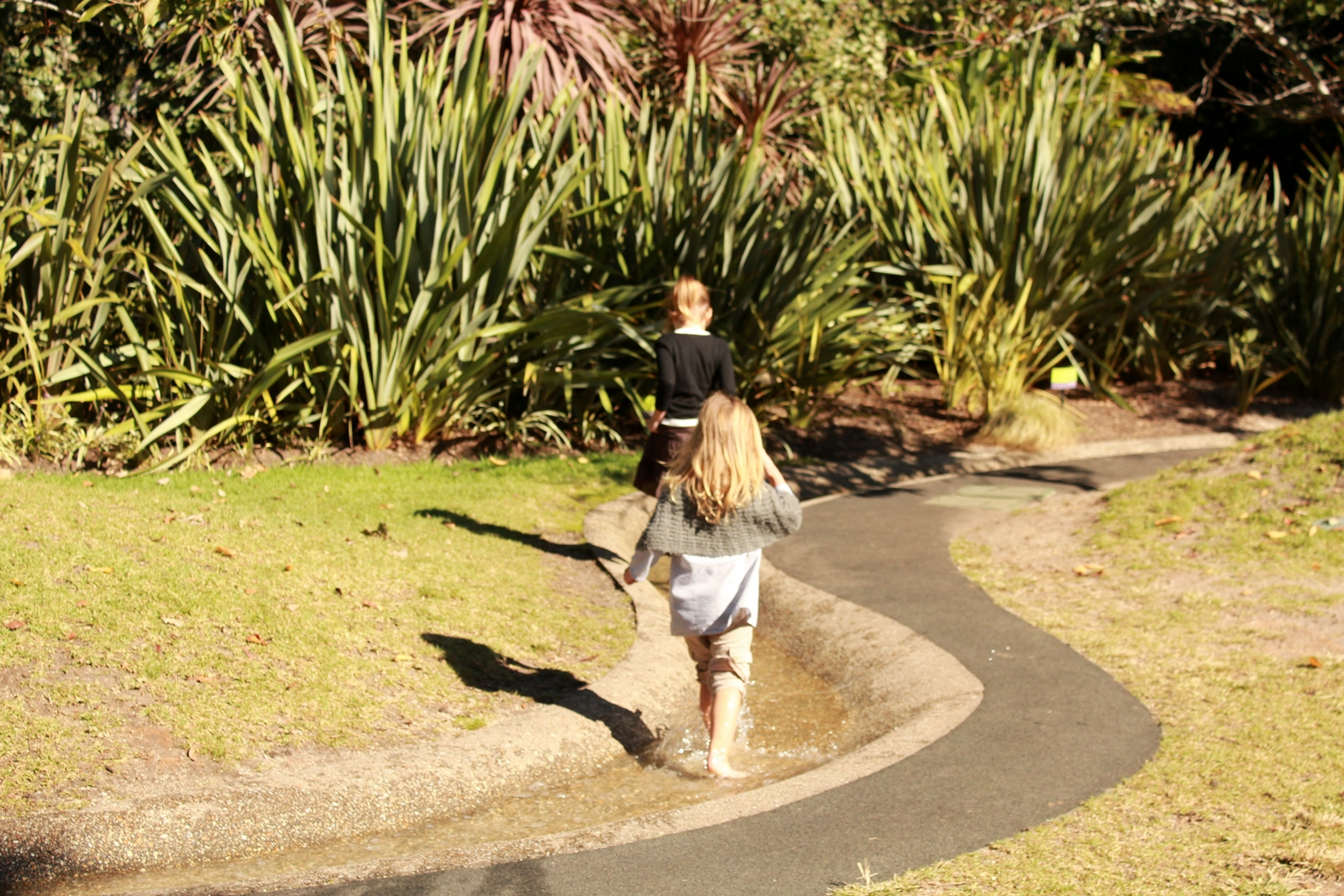 The baby Bettys in the Children\'s Garden at the Melbourne Royal ...