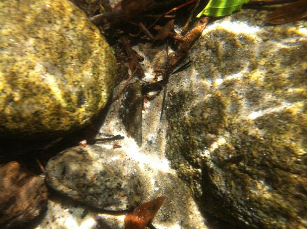 Daintree reiver rocks