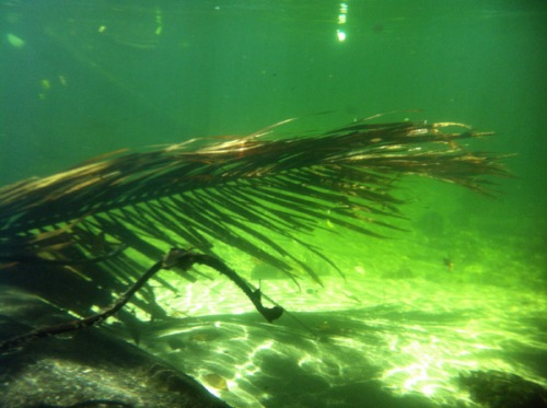 palm frond under water