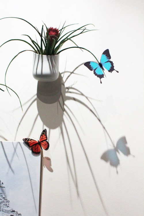 Butterflies on Urbio
