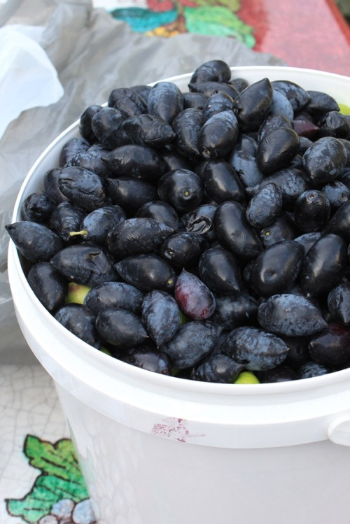 Bucket of balck olives