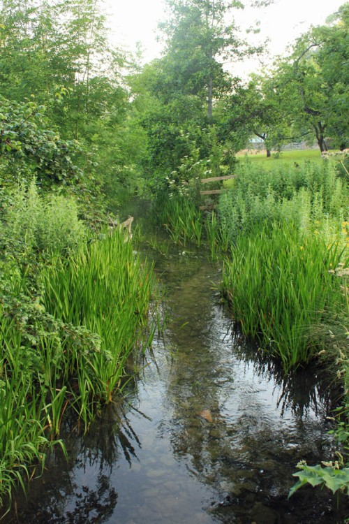 Cotswold's stream