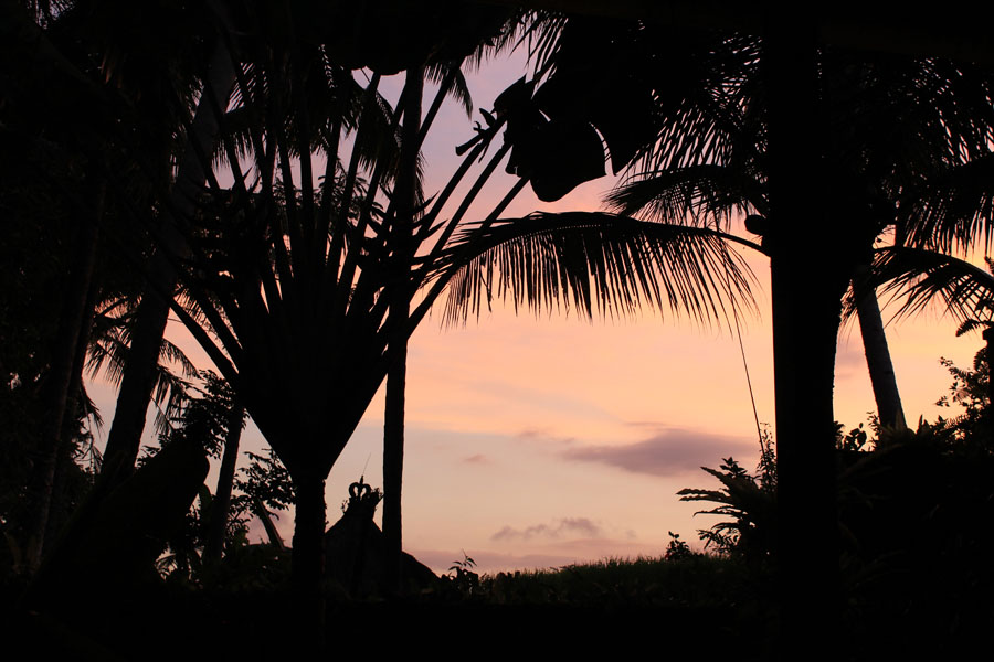 Palm silhouettes against sunset