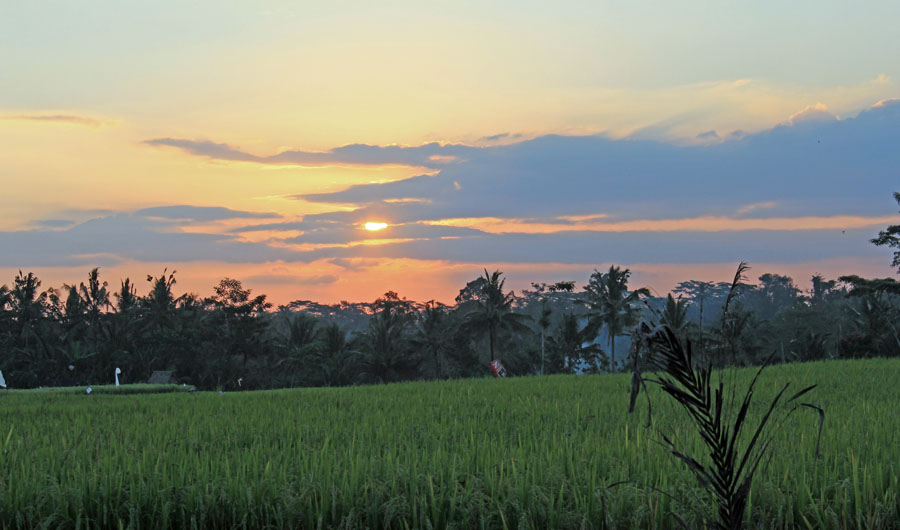 Sunset over rice fields in Ubud