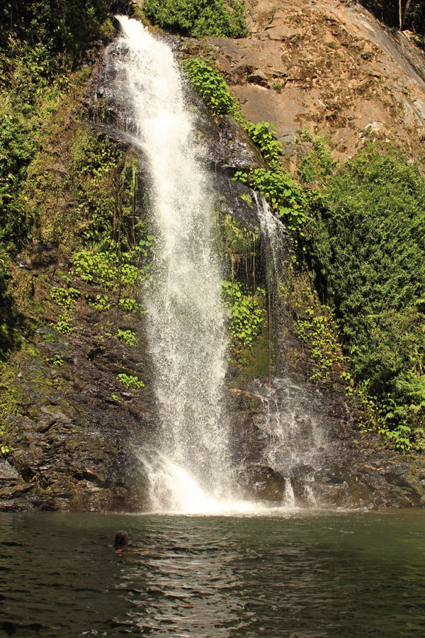 Cassowary Falls in the Daintree