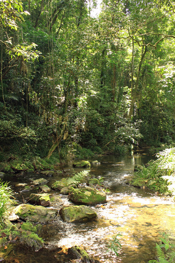 Creek fed by Cassowary Falls