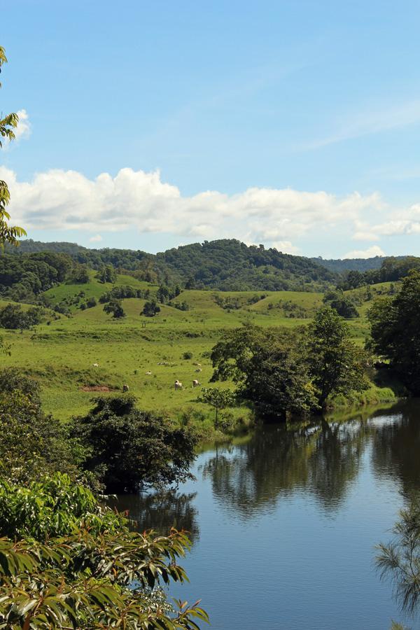 Daintree River tributary and pasture