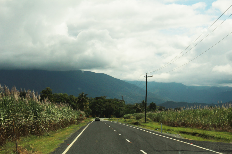 The road to Port Douglas - sugar cane fields