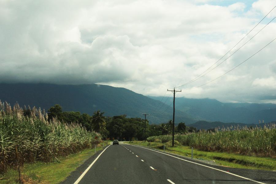 The road to Port Douglas - sugar cane fields