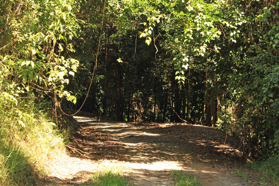 The track to Cassowary Falls