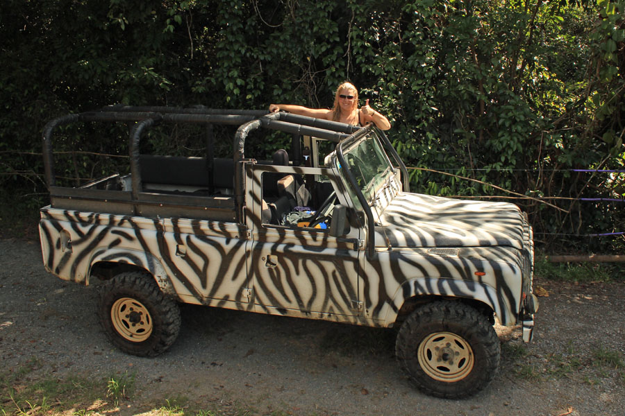 Zebra truck
